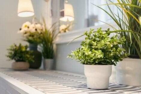 Viihtyisä koti syntyy kasveilla