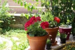 Parhaat kesäkukat: 6 vaihtoehtoa puutarhaan