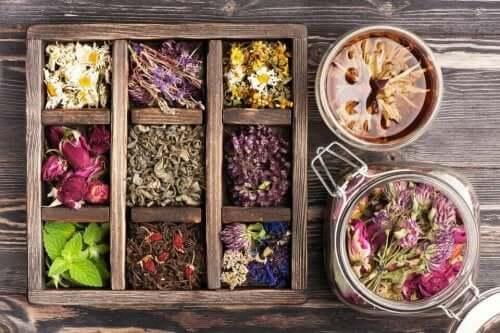Fytoterapia on kasvien käyttöä terapeuttisiin tarkoituksiin