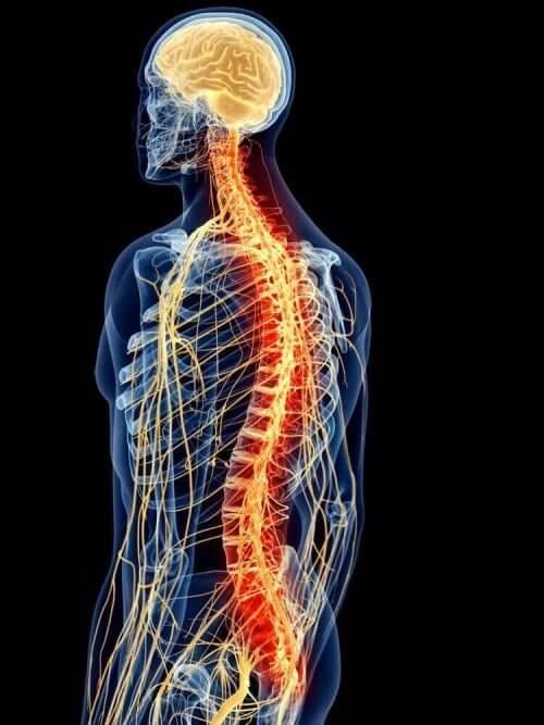 selkälilhasten anatomia