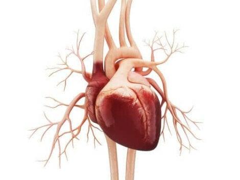 Eteislepatus on sydämen rytmihäiriö.