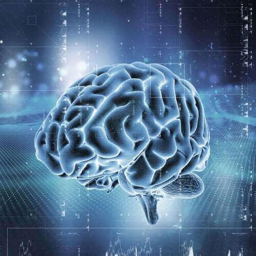Kuinka aivojen palkitsemisjärjestelmä toimii?