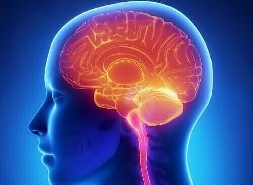 Aivojen palkitsemisjärjestelmän toiminta.