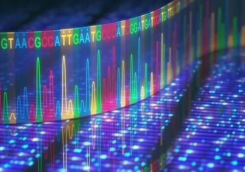 Geneettisiä mutaatioita voi esiintyä DNA:ssa, genomisella tasolla sekä kromosomien tasolla