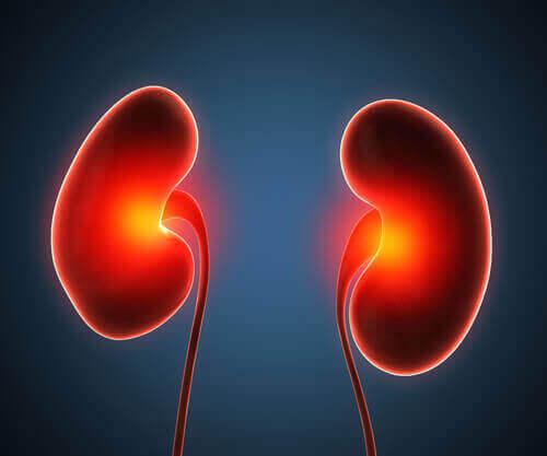 Vasopressiini säätelee munuaisten toimintaa