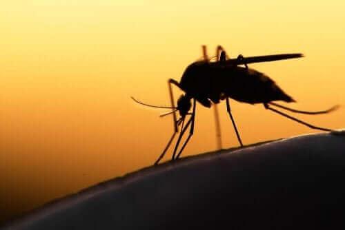 Tämänhetkiset hoidot koronavirukseen käsittävät malarialääkkeen