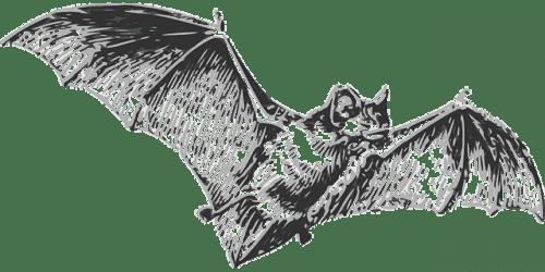 Lepakot ovat koronaviruksen aiheuttajia