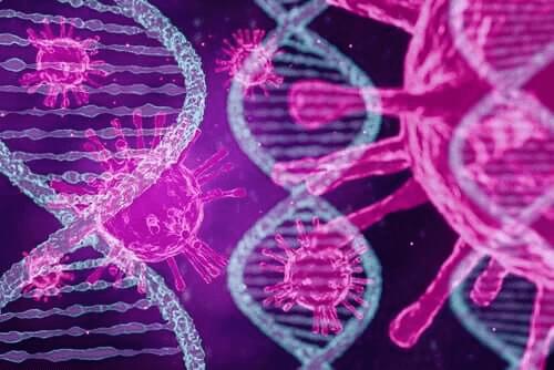 Tutkimus vahvistaa: koronaviruksesta on kolmea eri tyyppiä