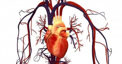 Korkea kolesteroli on sydän- ja verisuonitautien riskitekijä