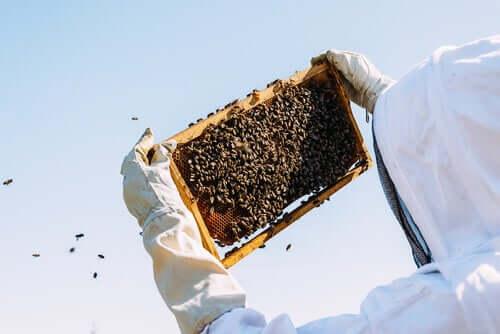 Kuningatarhyytelö on mehiläisten hoidosta saatava tuote, jonka pääasiallisena tarkoituksena on toimia ravintona mehiläispesän kuningattarelle