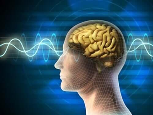 Kaura aamupalalla on loistava ruoka pitämään aivot terveinä ja keskittymiskyvyn huipussaan.