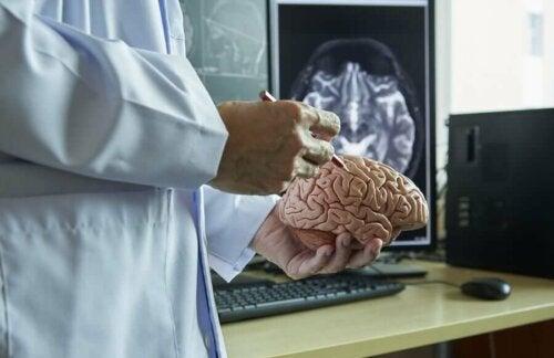 Multippeliskleroosi eli MS-tauti on neurologinen sairaus, eli toisin sanoen se vaikuttaa hermostoon