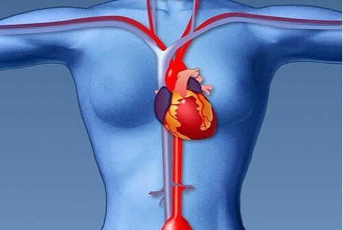 Epätavalliset sydänkohtauksen oireet naisilla: nämä täytyy jokaisen tietää.