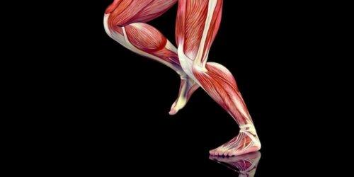 Lääketieteessä on kuvattu tähän asti yli 250 eri triggeripistettä, jotka ovat jakautuneet kehon eri lihaksiin
