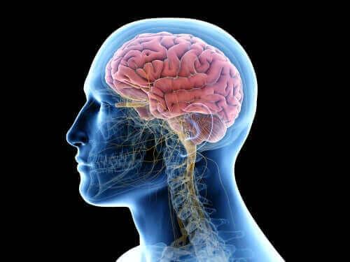Enkefaliitti esiintyy aivoissa.