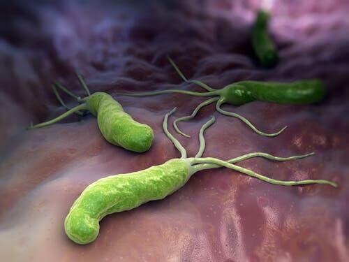 Immuunireaktio bakteereja ja viruksia vastaan.