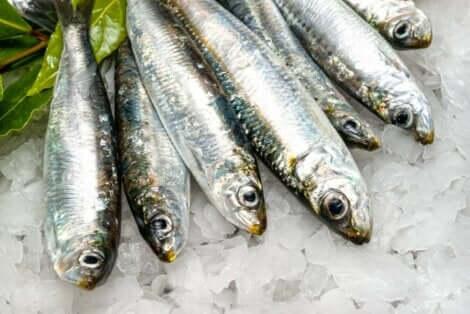 Sardiinin syönnin tärkeimmät hyödyt liittyvät mm. lihaksiin ja luihin