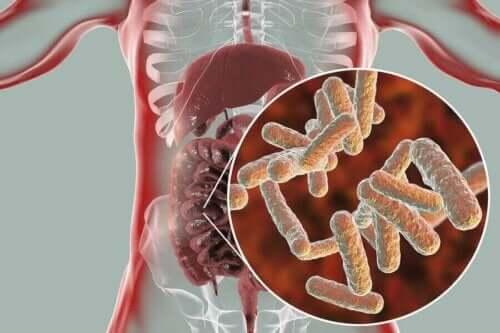 Ihmisen normaali mikrobiomi on hyvin monimuotoinen