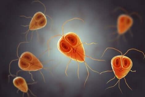 Giardiaasin oireet aiheuttaa alkueläin