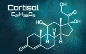 Liika kortisoli: kaikki mitä tarvitsee tietää