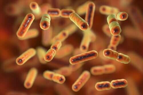 Suoliston mikrobiota.