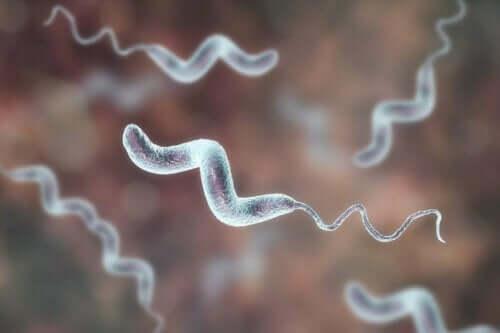 Kampylobakteeri-infektiot ovat yleisin syy ripuliin