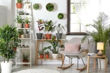 Helppohoitoisia ja kestäviä kasveja