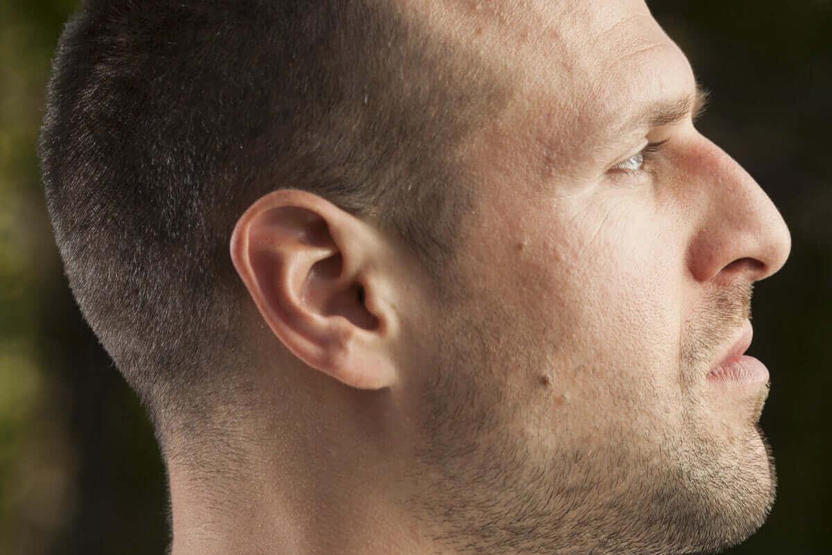Erilaisia nenän muotoja: vaihtelu syntyperän mukaan.