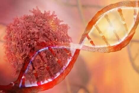 Syöpäsolut syntyvät mutaation seurauksena