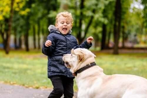 Mitä tulisi tehdä, jos lapsi pelkää eläimiä?