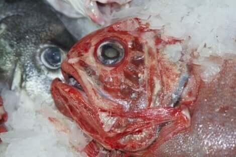 Elohopea kaloissa on turvallisuusriski.