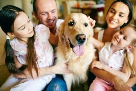 Jos lapsi pelkää eläimiä, hänet kannattaa tutustuttaa ensin aikuiseen koiraan