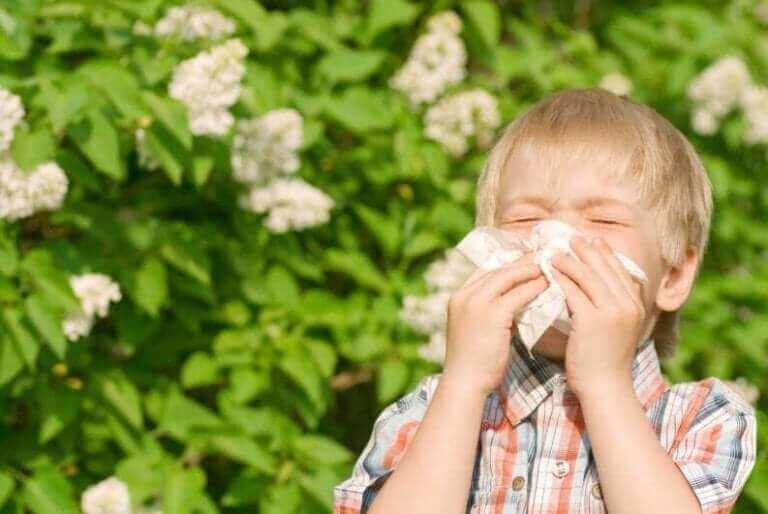 Lasten allergioita: siitepöly.