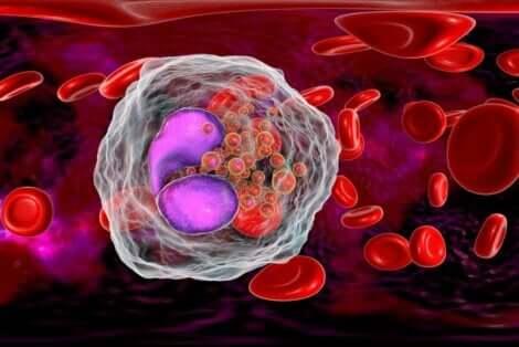 Mantelimaidosta saa immuunijärjestelmälle tärkeää sinkkiä