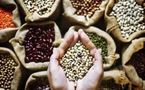 Palkokasveista saa tärkeää kasviperäistä proteiinia lihasmassan kasvattamiseen