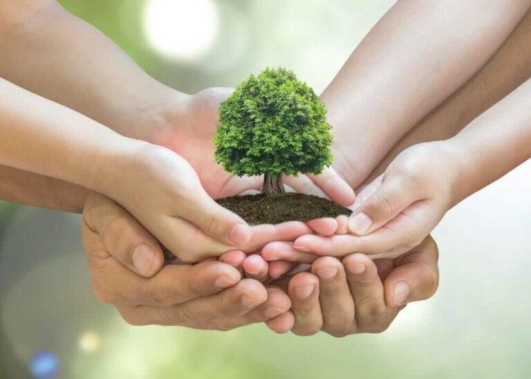 Kuinka pitää huolta ympäristöstä kotona? 10 vinkkiä