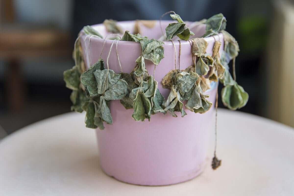 Erilaiset tuholaiset ja taudit sairastuttavat kasveja.