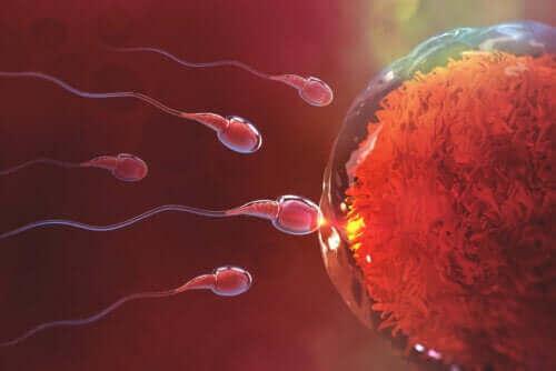 Kauanko raskaaksi tuleminen kestää yhdynnän jälkeen?