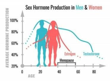 Mitä sukupuolihormonit tekevät?
