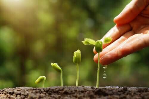 6 vinkkiä ympäristöä säästävän puutarhan luomiseen