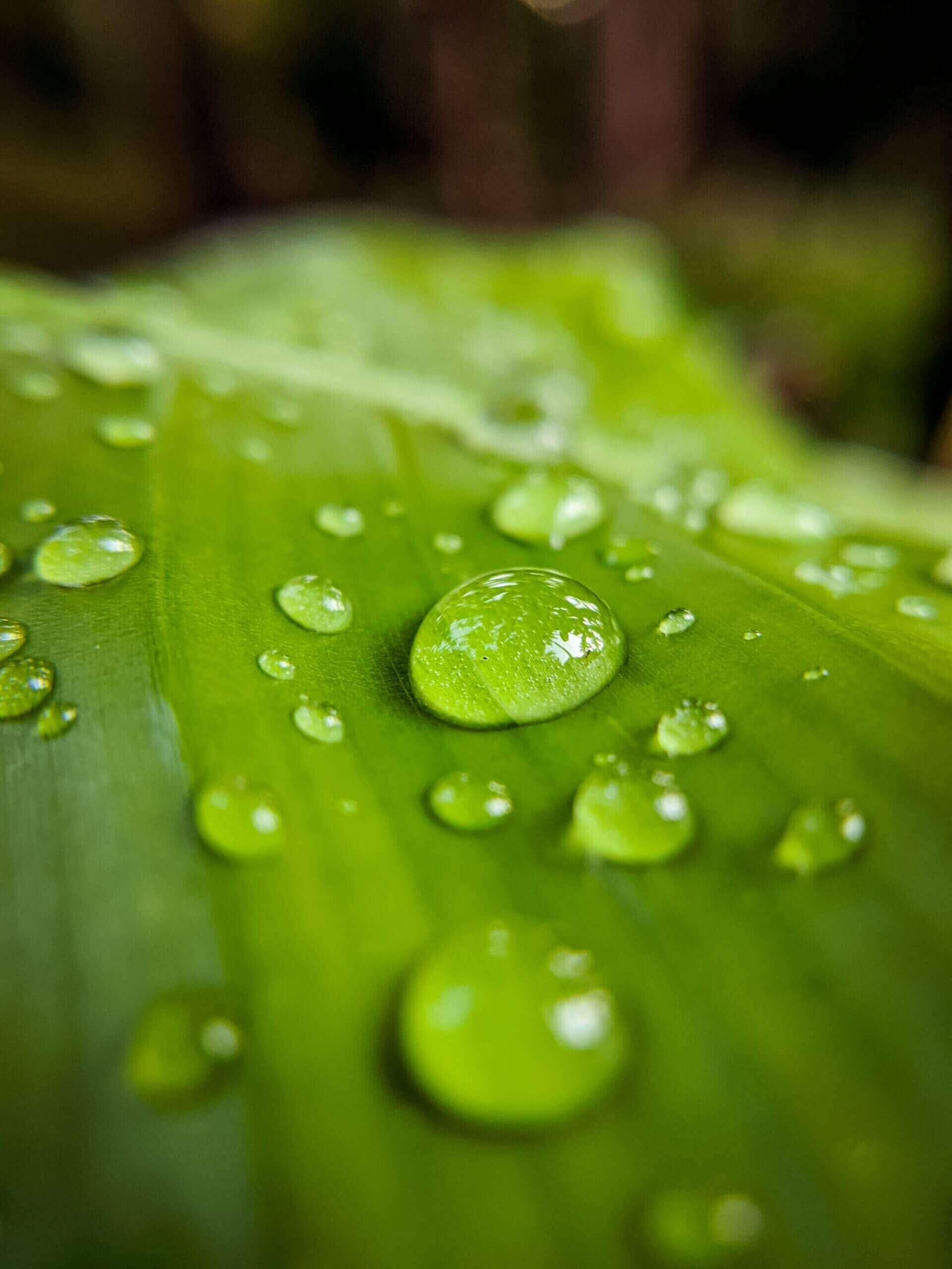 Sadevesi kannattaa kerätä talteen.
