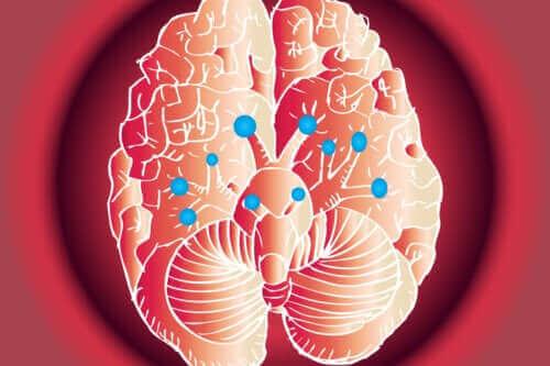 Ihmisellä on 12 paria aivohermoja - mitkä ovat niiden funktiot?