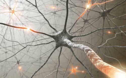 Jokaisella aivohermolla on omat funktionsa.
