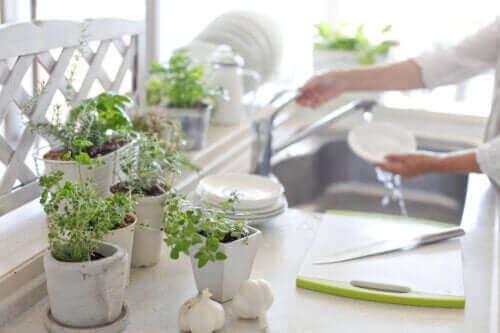 5 syytä pitää huonekasveja keittiössä