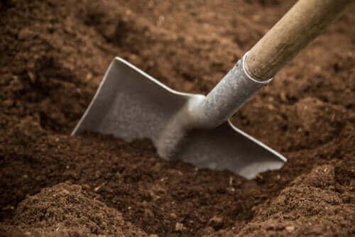 Puutarhan maaperä: tyypit ja ominaisuudet