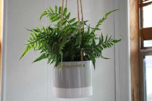 kylpyhuoneen sisustamiseen voidaan käyttää kasveja.